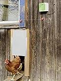 Cajou Automatische Hühnertür inklusive Schieber mit Führungsschienen, Lichtsensor und Zeitsteuerung möglich (mit Schieber 22 x 33 cm)